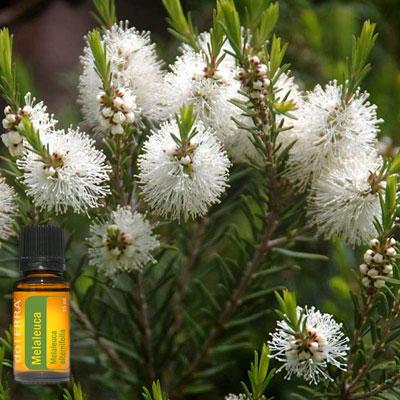 Esenciálny olej malaleuca čajovník doterra tea tree